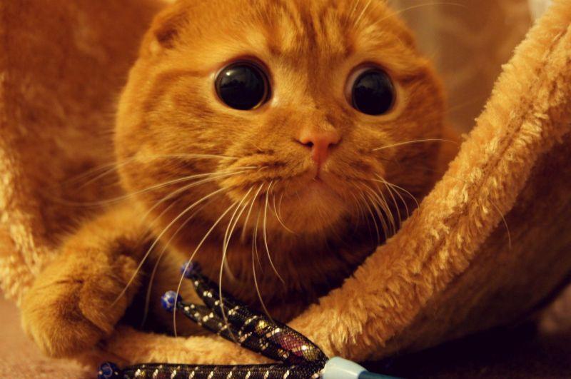 Фото Кот в сапогах с большими глазами подборка (27)