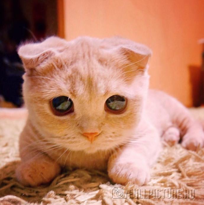 Фото Кот в сапогах с большими глазами подборка (28)