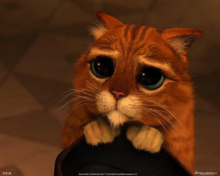 Фото Кот в сапогах с большими глазами подборка (3)