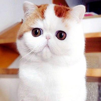 Фото Кот в сапогах с большими глазами подборка (30)