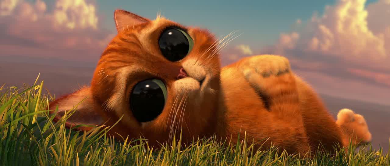 Фото Кот в сапогах с большими глазами подборка (4)