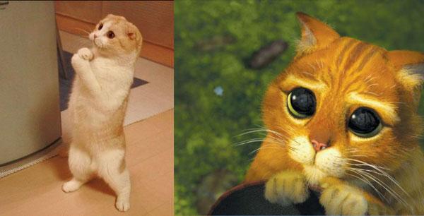 Фото Кот в сапогах с большими глазами подборка (5)