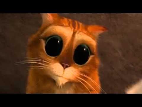 Фото Кот в сапогах с большими глазами подборка (9)