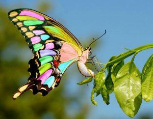 Фото бабочек красивых с названиями 026