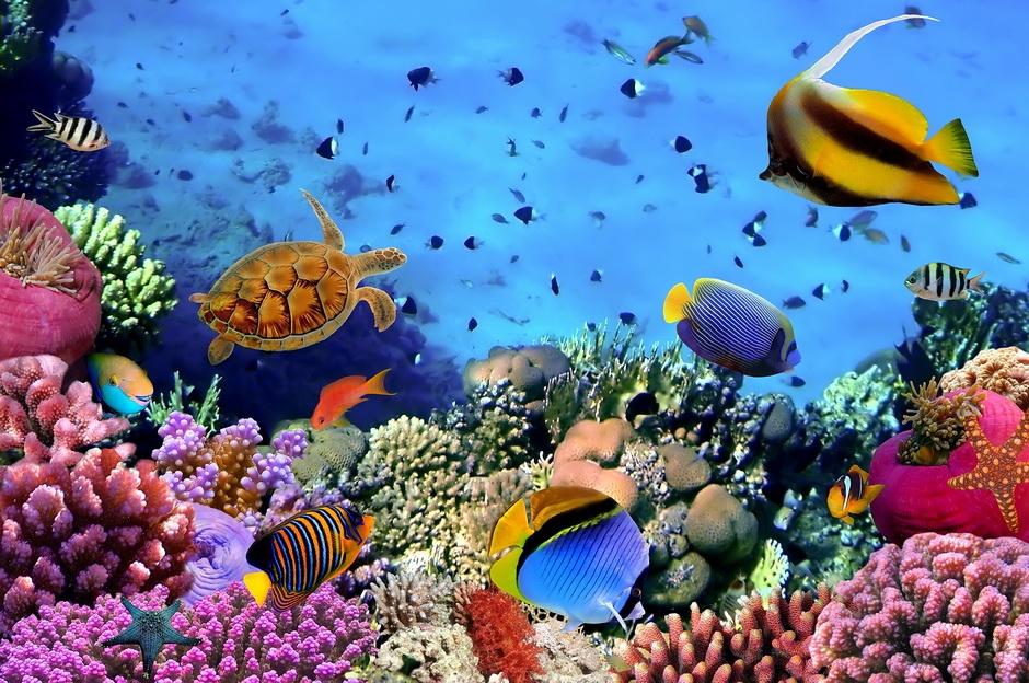 Фото в море в Египте   подборка 019