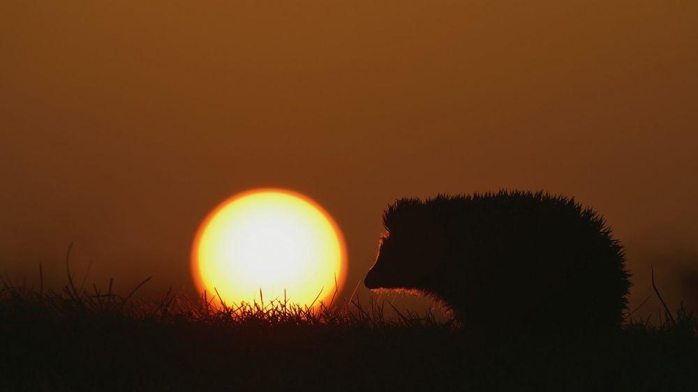 Фото девушка и закат солнца   подборка 015