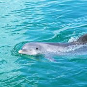 Фото дельфины для рабочего стола   подборка020