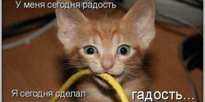 Фото животные домашние смешные   подборка 027