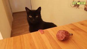 Фото и видео кошек и собак 021