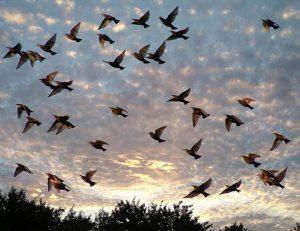 Фото и названия птиц средней полосы России 029