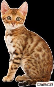 Фото кошек разных пород скачать бесплатно 025
