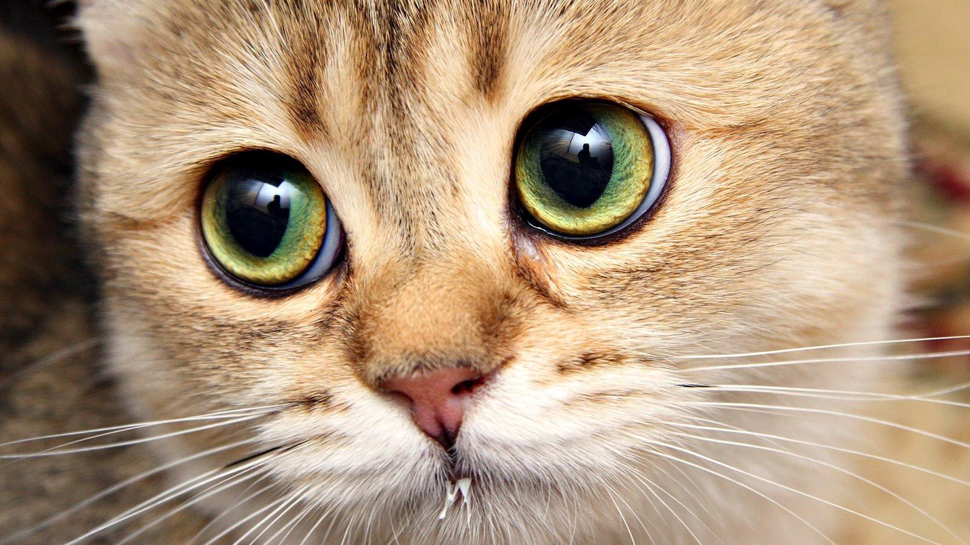 Фото на рабочий стол кошки и котята   коллекция (10)