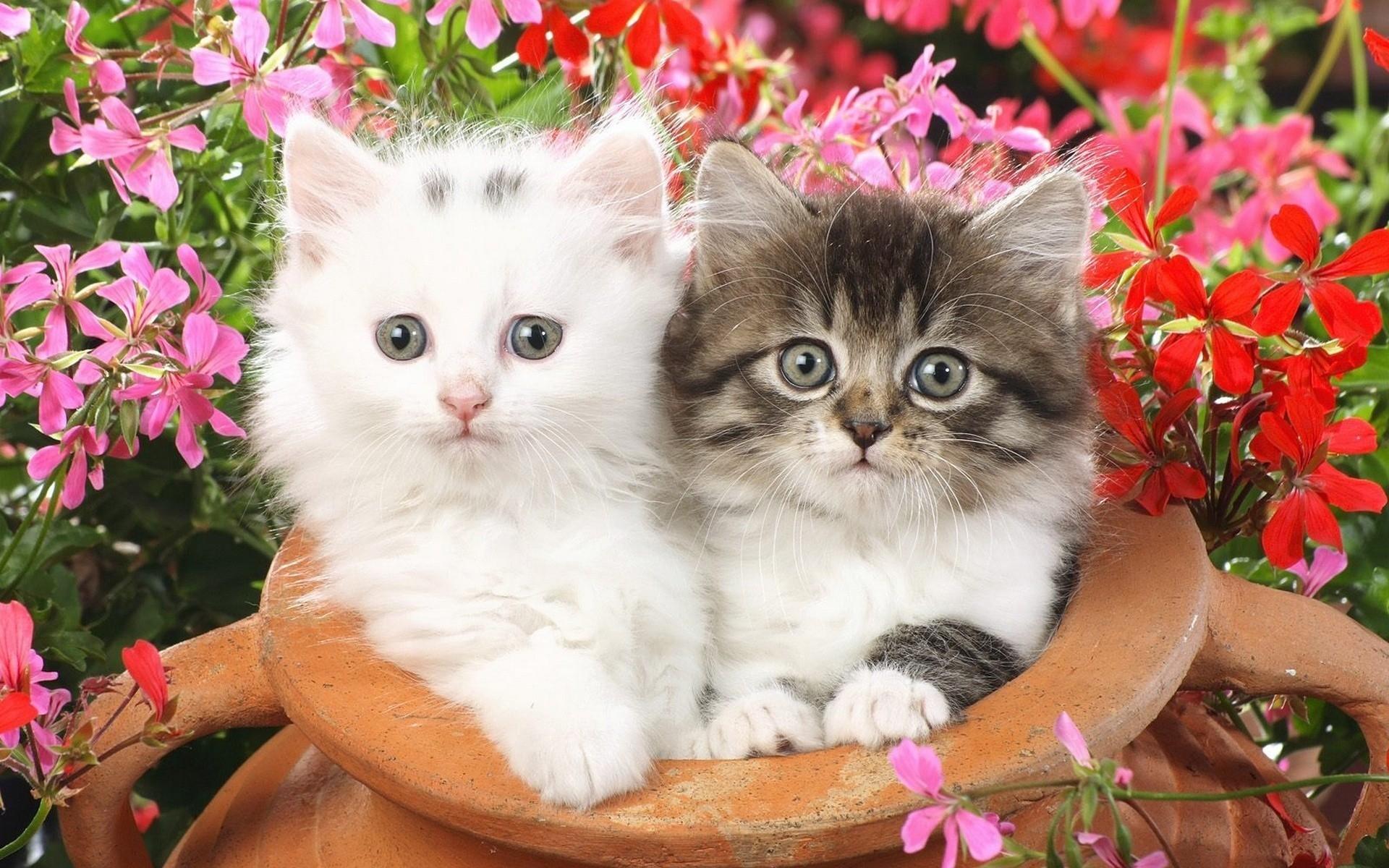 Фото на рабочий стол кошки и котята   коллекция (12)