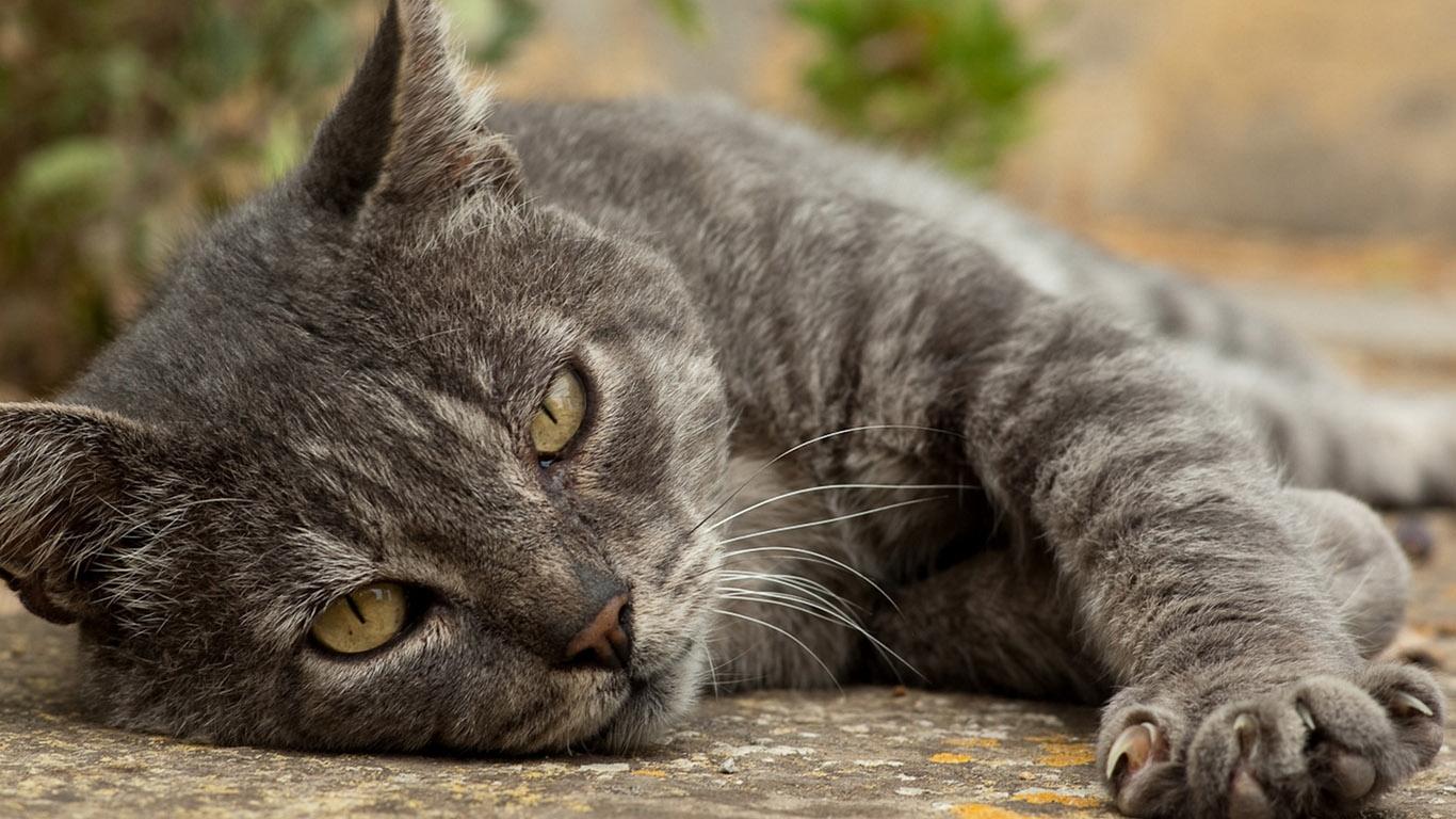Фото на рабочий стол кошки и котята   коллекция (14)