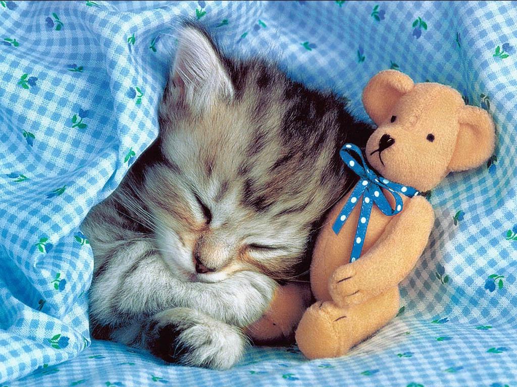 Фото на рабочий стол кошки и котята   коллекция (16)