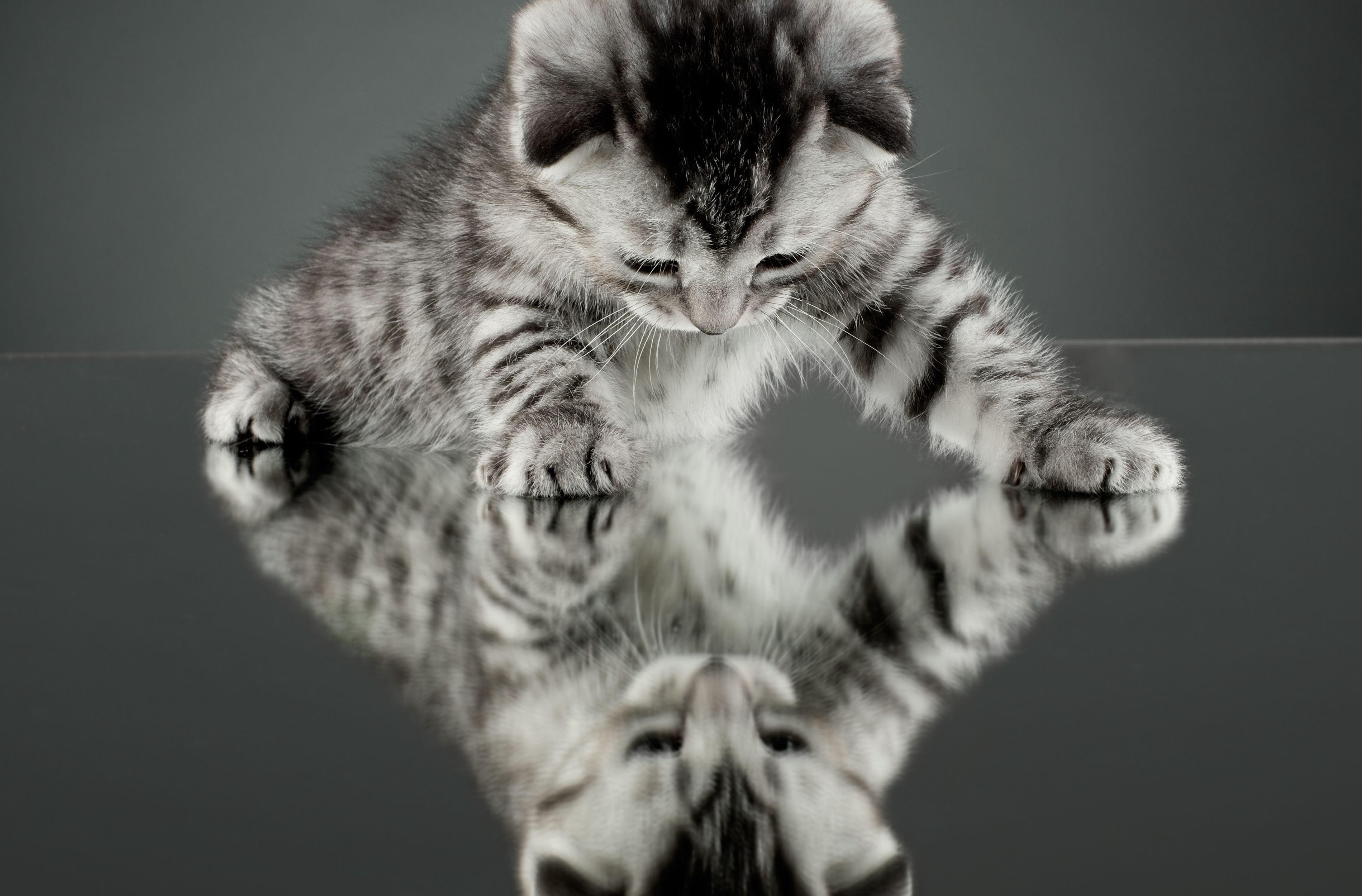 Фото на рабочий стол кошки и котята   коллекция (17)