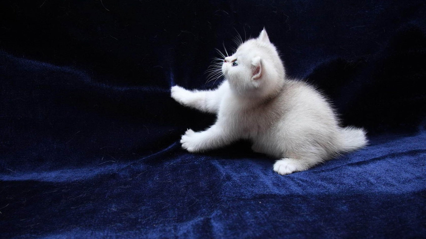 Фото на рабочий стол кошки и котята   коллекция (18)