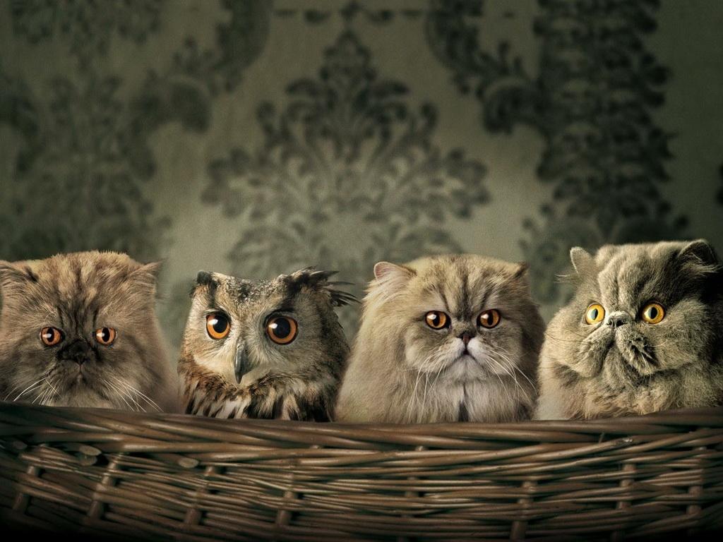 Фото на рабочий стол кошки и котята   коллекция (20)