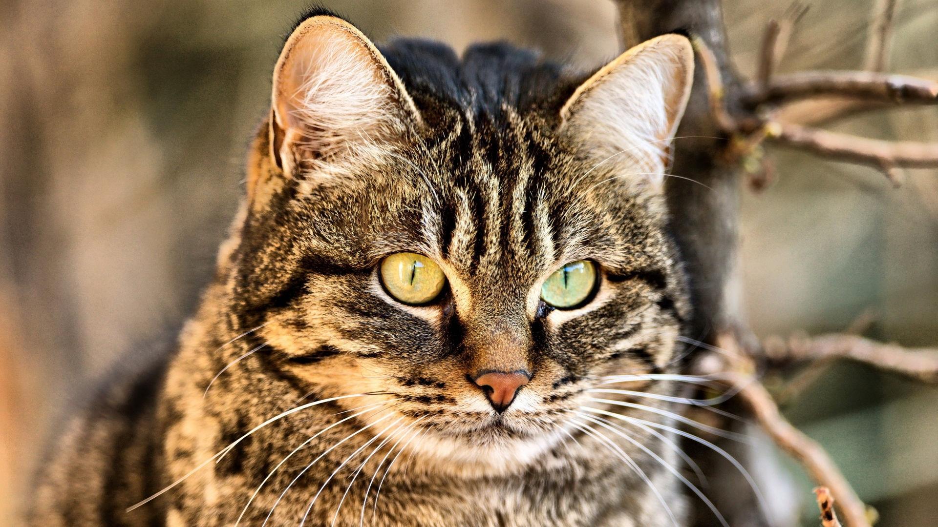 Фото на рабочий стол кошки и котята   коллекция (23)