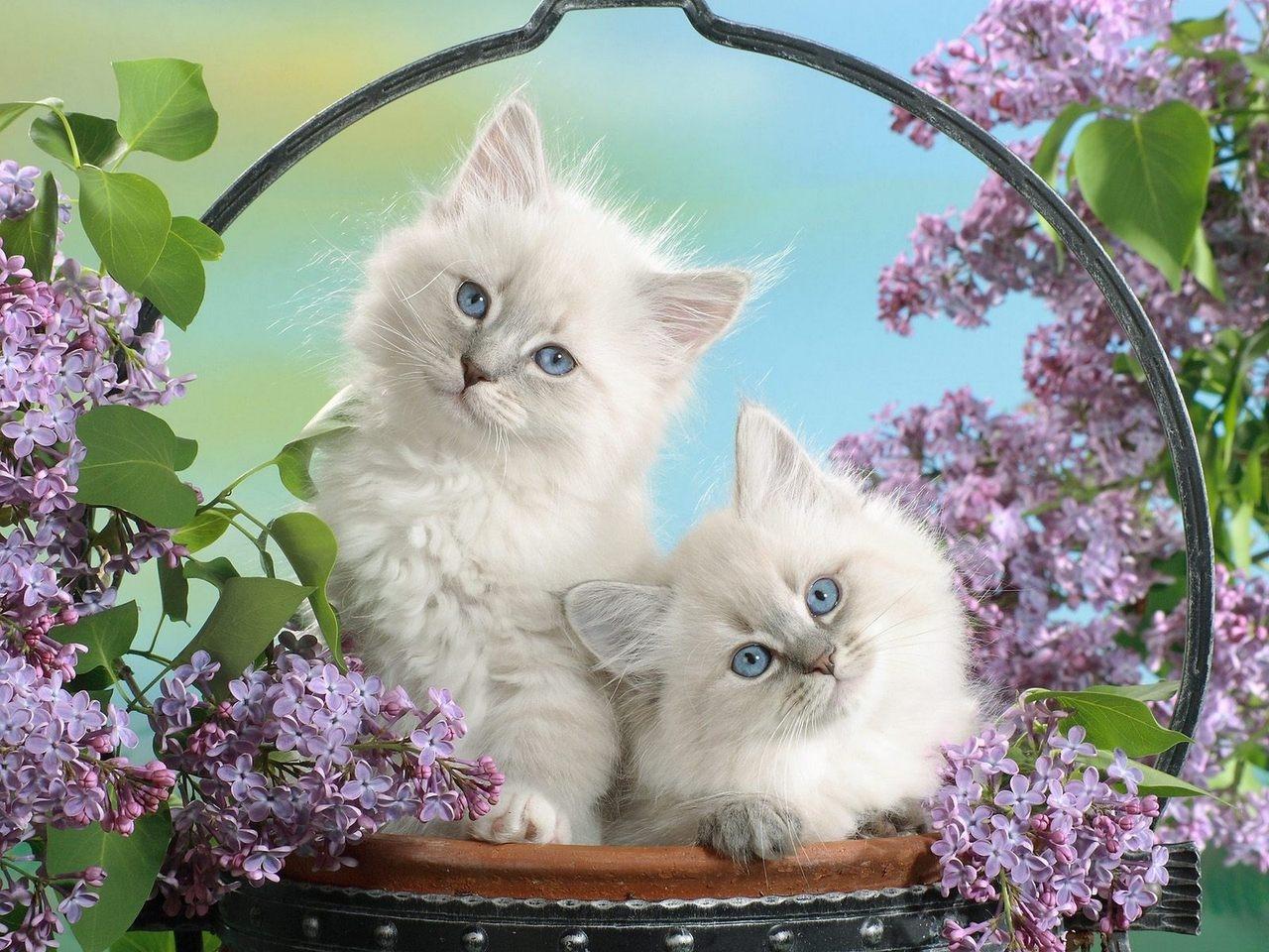 Фото на рабочий стол кошки и котята   коллекция (5)