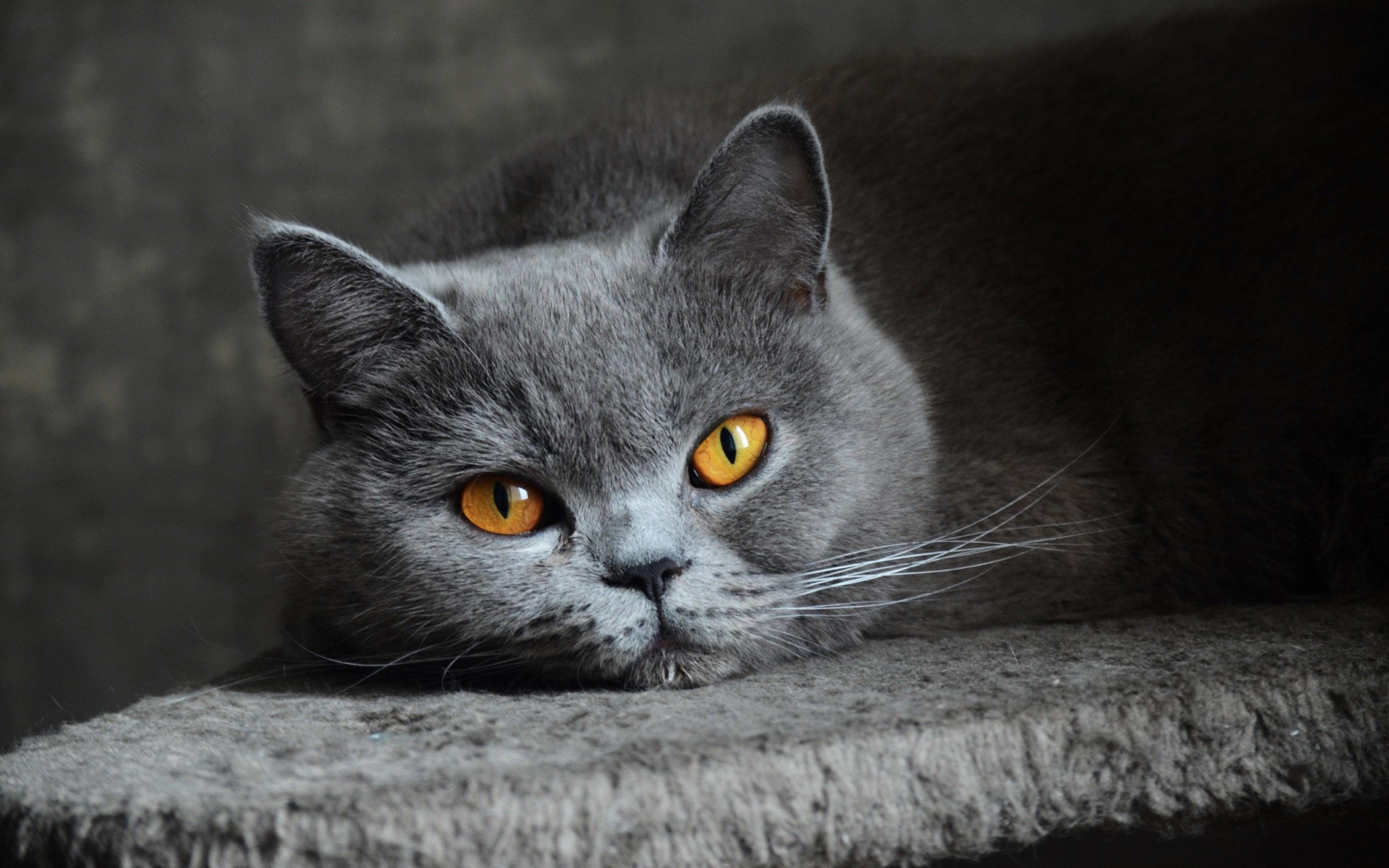 Фото на рабочий стол кошки и котята   коллекция (7)