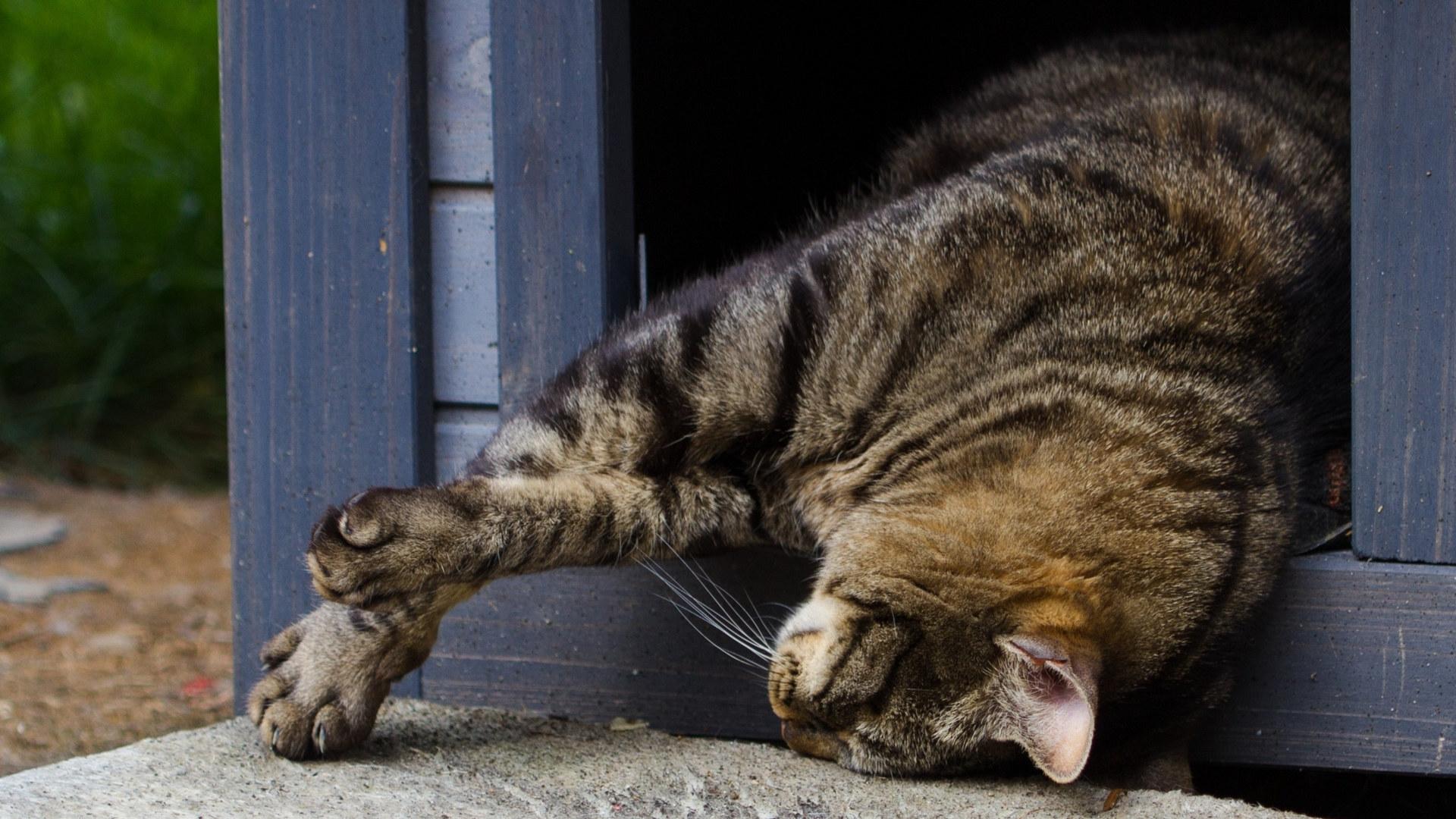 Фото на рабочий стол кошки и котята   коллекция (8)