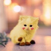 Фото няшные котики рисунки   подборка023