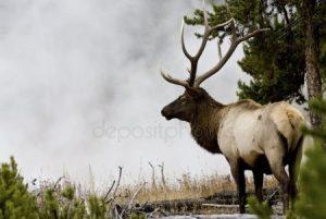 Фото оленя и лося вместе   смешные картинки 024