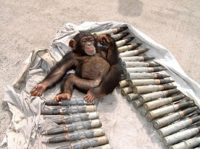 Фото приколы военные   смешные картинки 016