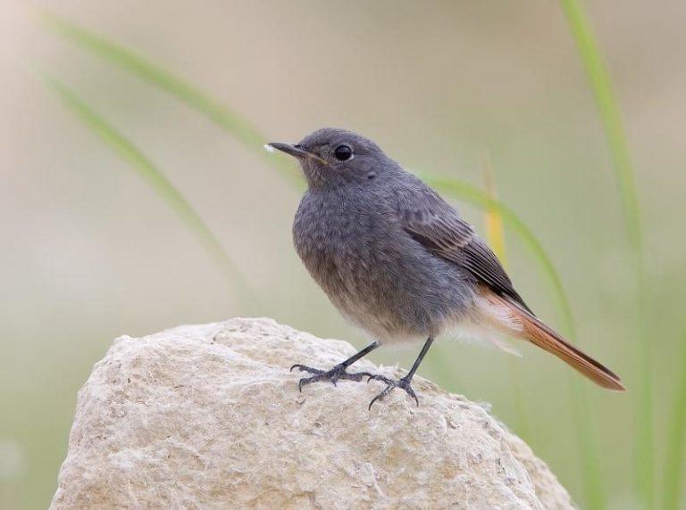 фото птицы живущие в донецкой области эту тему рамках