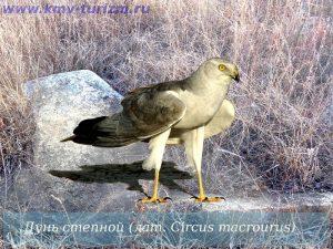 Фото птицы Ставропольского края   картинки и названия (30)