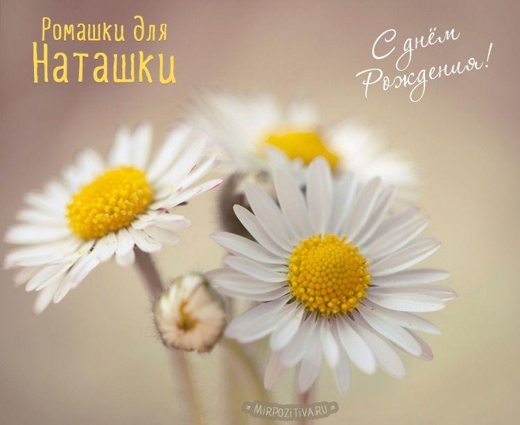 тому картинка цветы для наташки шторы плиссировкой напоминают