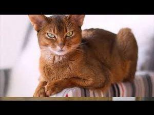 Фото рыжих кошек и котят   подборка 028