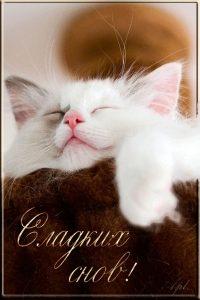 Фото спокойной ночи котята 019