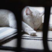 Фото спящих в поезде девушек   милая подборка 024