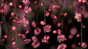 Фото цветы в хорошем разрешении (19)