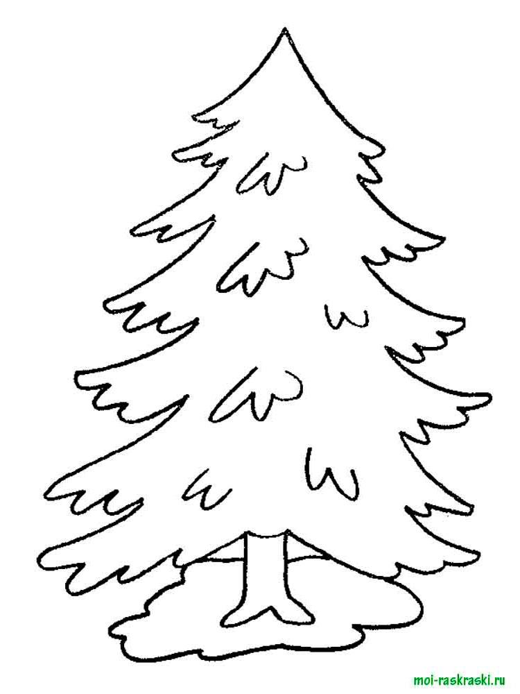 Хвойные деревья раскраски для детей   картинки 001