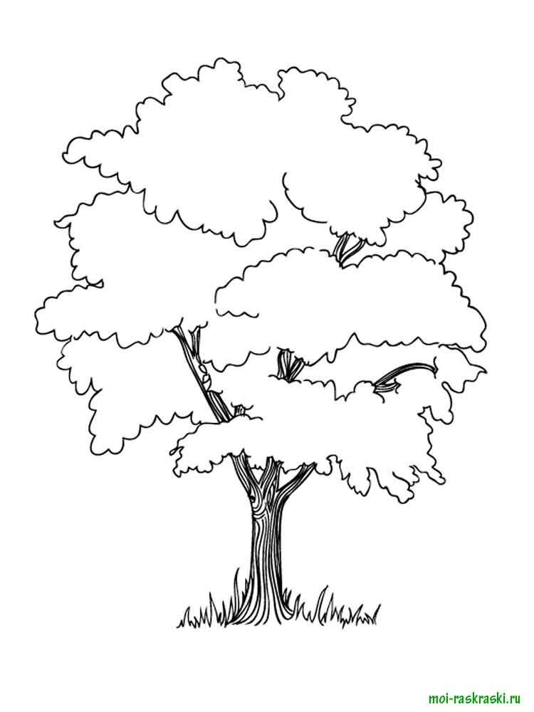 Хвойные деревья раскраски для детей   картинки 002