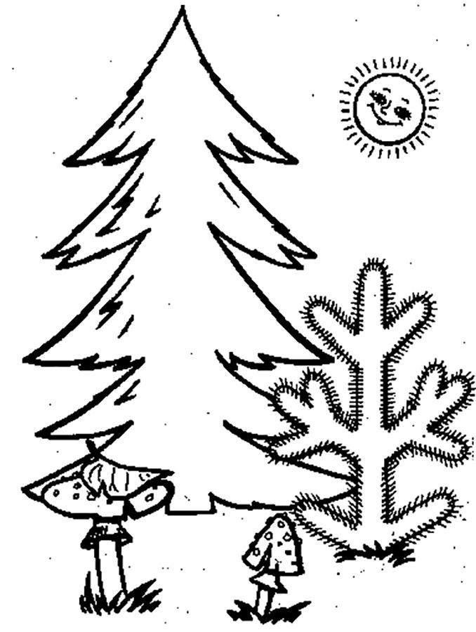 Хвойные деревья раскраски для детей   картинки 003
