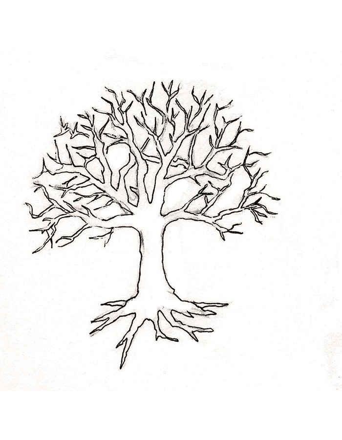 Хвойные деревья раскраски для детей   картинки 004