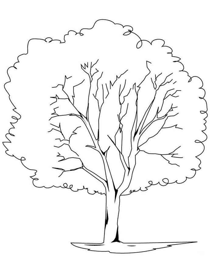 Хвойные деревья раскраски для детей   картинки 006