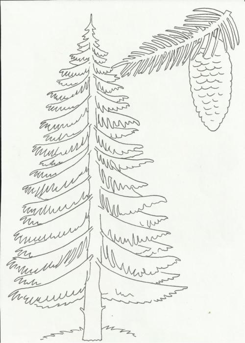 Хвойные деревья раскраски для детей   картинки 007