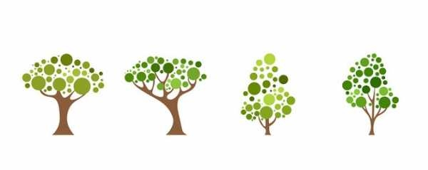 Хвойные деревья раскраски для детей   картинки 008