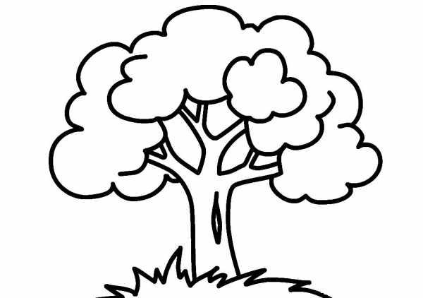 Хвойные деревья раскраски для детей   картинки 015