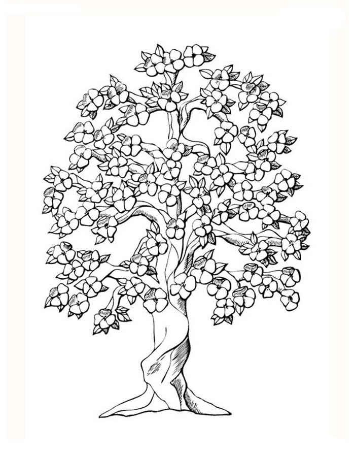 Хвойные деревья раскраски для детей   картинки 017