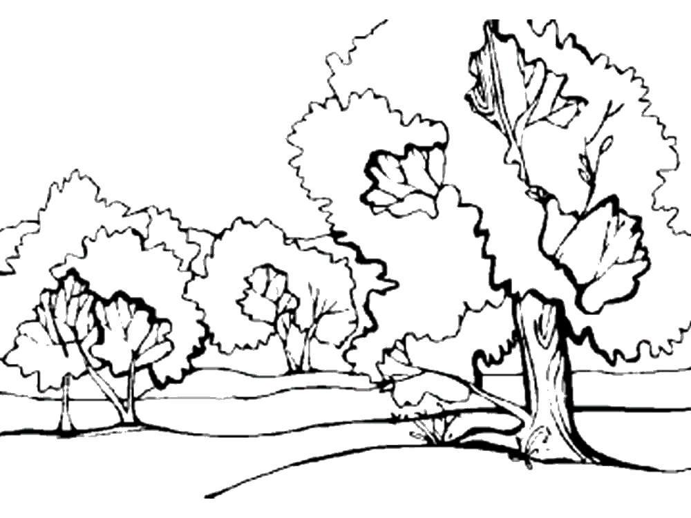 Хвойные деревья раскраски для детей   картинки 018