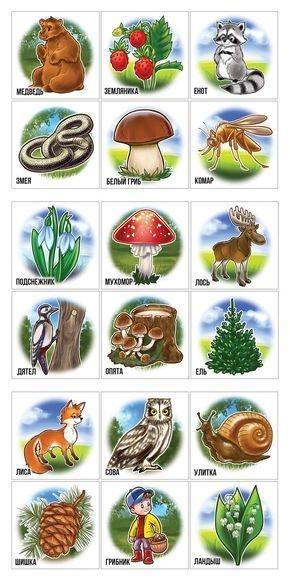Хвойные деревья раскраски для детей   картинки 019
