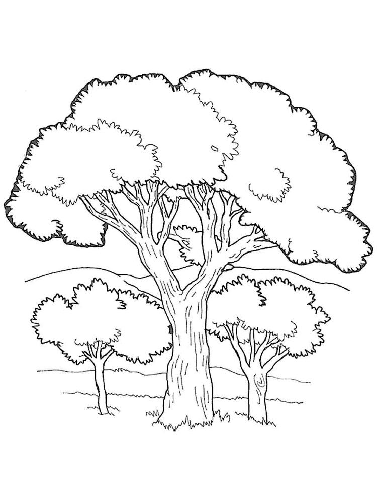 Хвойные деревья раскраски для детей   картинки 021