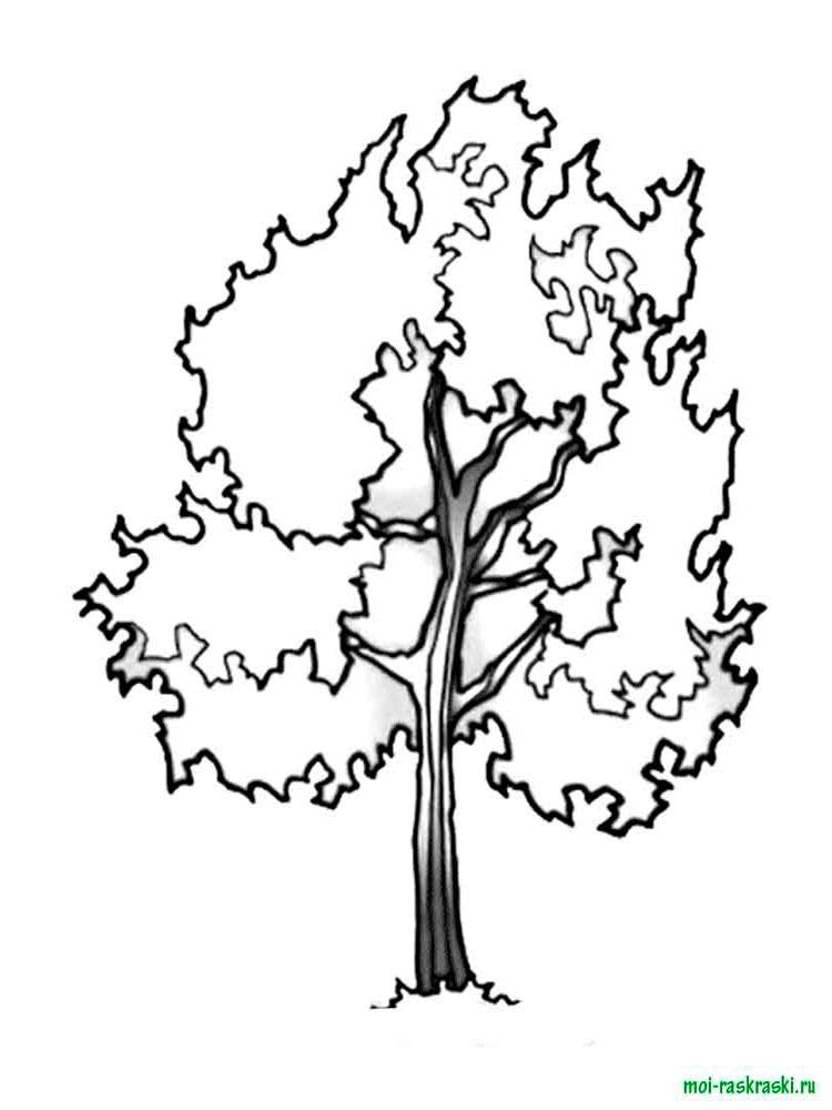 Хвойные деревья раскраски для детей   картинки 022