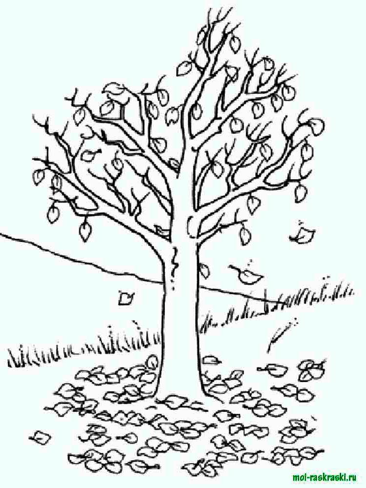 Хвойные деревья раскраски для детей   картинки 023